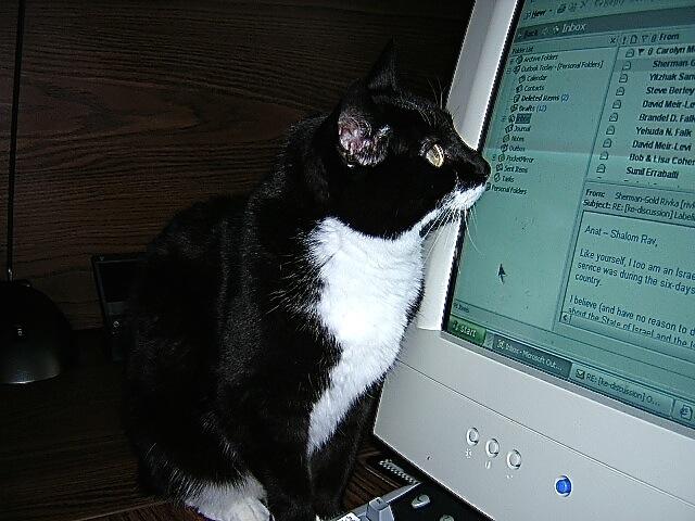 Mollyandhercomputer